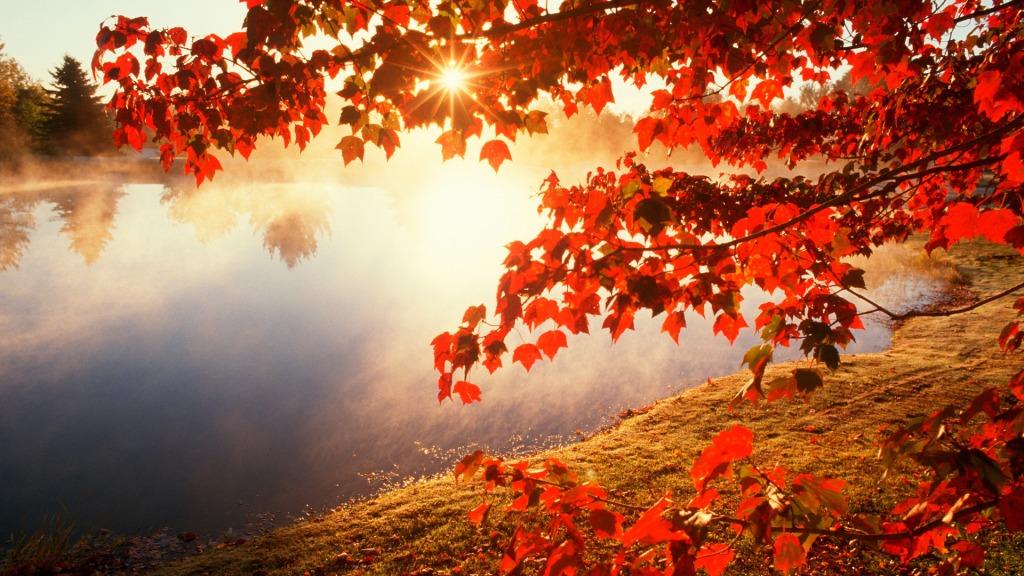 autumn-leaves-wallpaper-widescreen-2d2